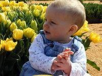 Tulipsyd